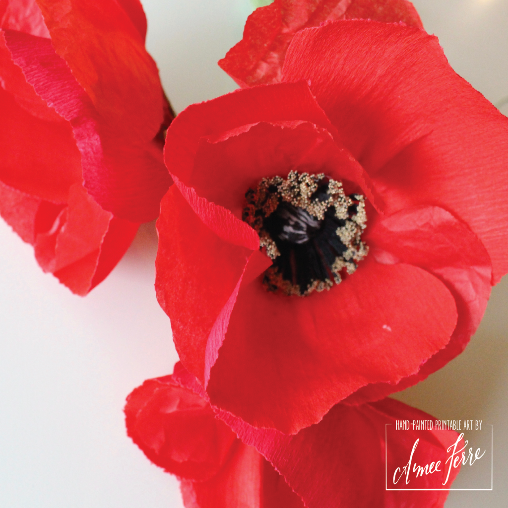 P2P Poppies CloseUp-01